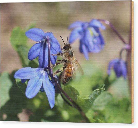 Honeybee On Siberian Squill Wood Print
