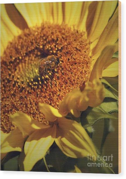 Honeybee On Sunflower Wood Print by Sharon Talson