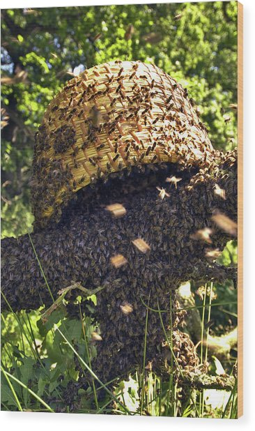 Honeybees Swarming Wood Print
