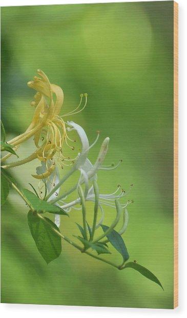 Honeysuckle Wood Print