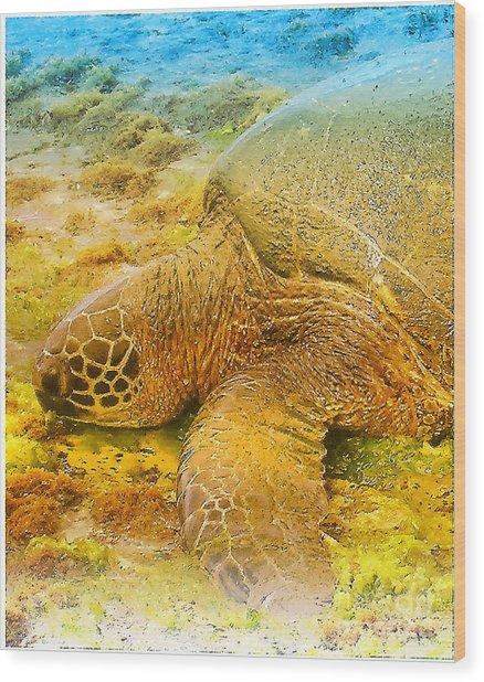 Honu  Sea Turtle Wood Print