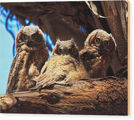 Hoo Are You Wood Print