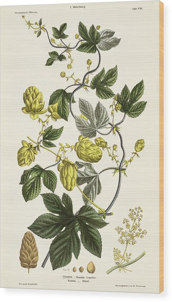 Hop Vine From The Young Landsman Wood Print