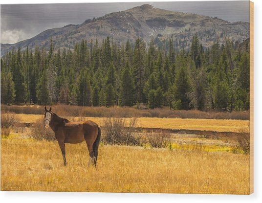 Hope Valley Horse Wood Print