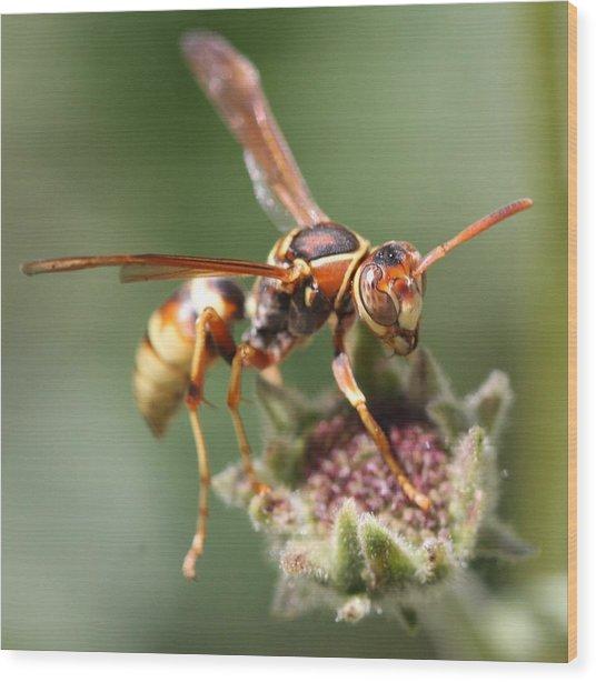 Hornet On Flower Wood Print
