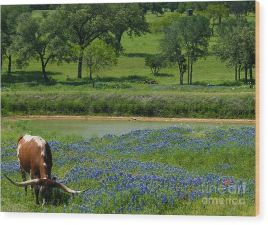 Horns And Bluebonnets Wood Print