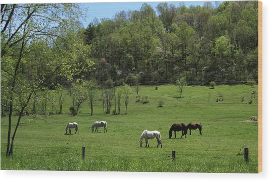Horse 27 Wood Print