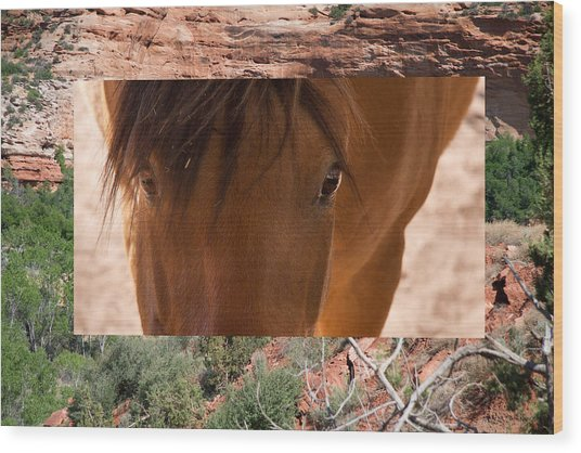 Horse And Canyon Wood Print