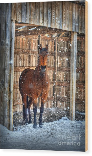 Horse And Snow Storm Wood Print