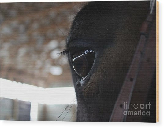 Horse Eye From Behind Wood Print
