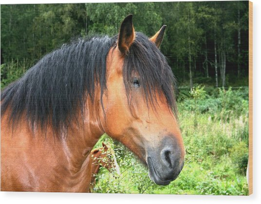 Horse Field Wood Print