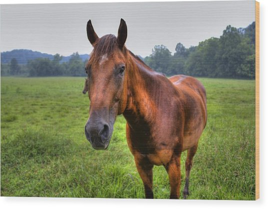 Horse In A Field Wood Print