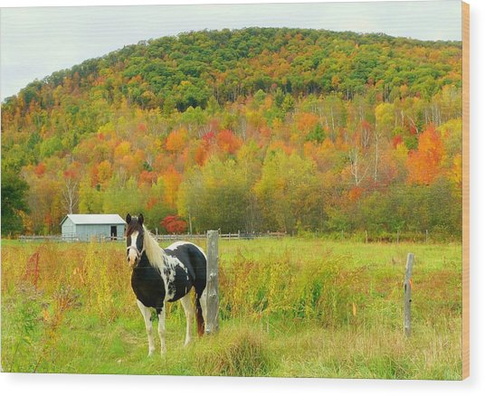 Horse In Autumn Field Wood Print