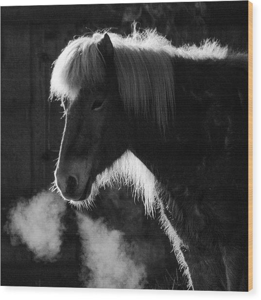 Horse In Black And White Square Format Wood Print