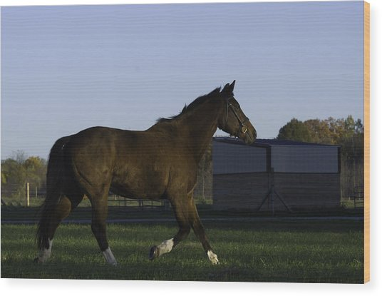 Horse In Field Wood Print by Jason Smith