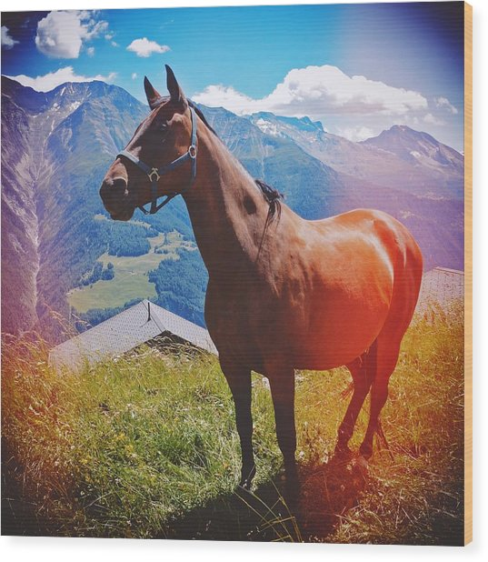 Horse In The Alps Wood Print