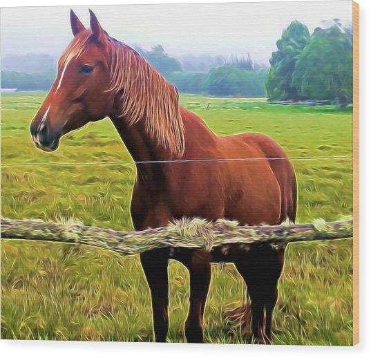 Horse In The Pasture Wood Print