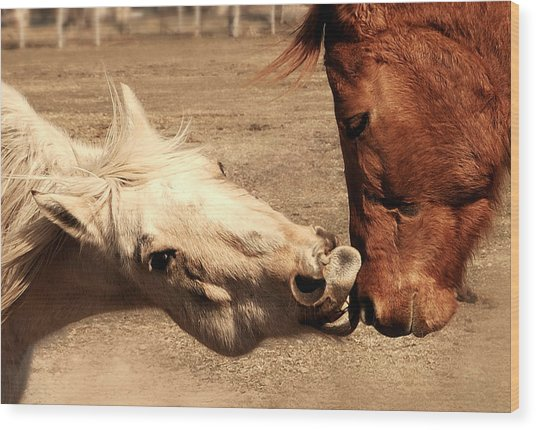 Horse Play Wood Print by Steven Milner