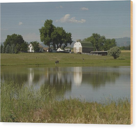 Horse Ranch Wood Print by Stephen Schaps