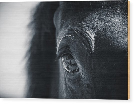 Horse Reflection Wood Print
