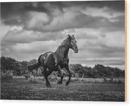 Horse Running In Field Wood Print by Rory Turnbull / Eyeem