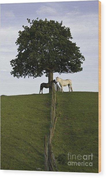 Horse Whisperers   Wood Print