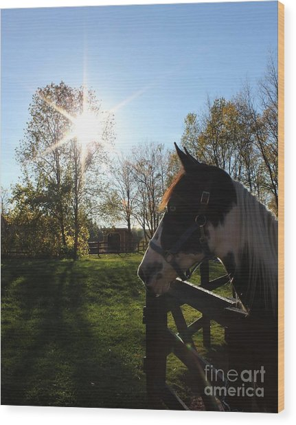 Horse With Sunburst Wood Print