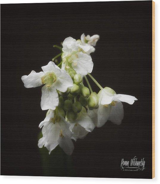 Horseradish Bloom Wood Print