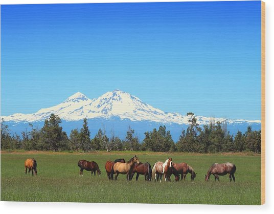 Horses At Sisters Mountain Wood Print