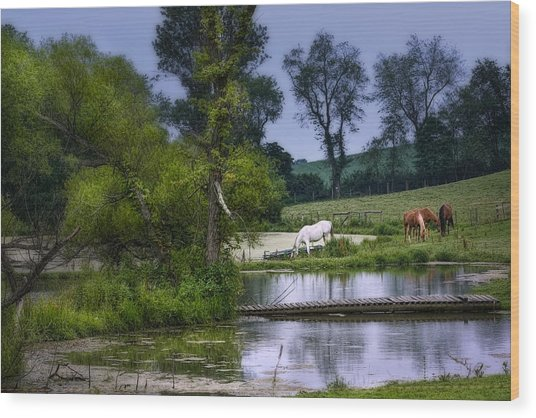 Horses Grazing At Water's Edge Wood Print