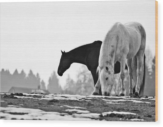 Horses Grazing Wood Print
