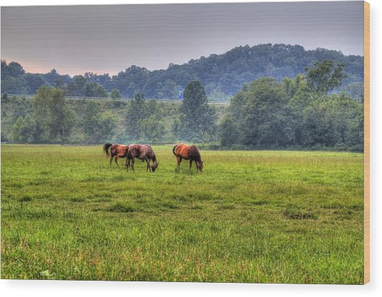 Horses In A Field 2 Wood Print