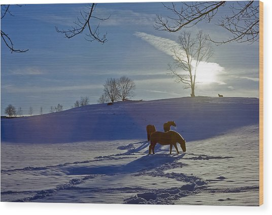 Horses In Snow Wood Print