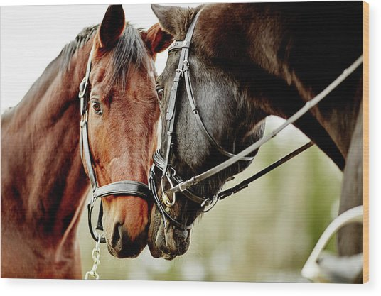 Horses Together Wood Print by Johner Images