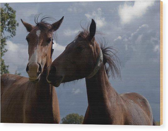 Horsing Around Wood Print