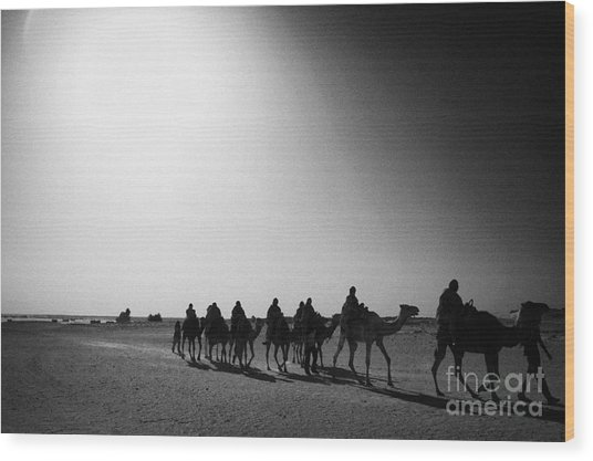 hot desert sun beating down on camel train in the sahara desert at Douz Tunisia Wood Print by Joe Fox