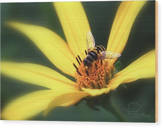 Hover Fly On Flower Wood Print