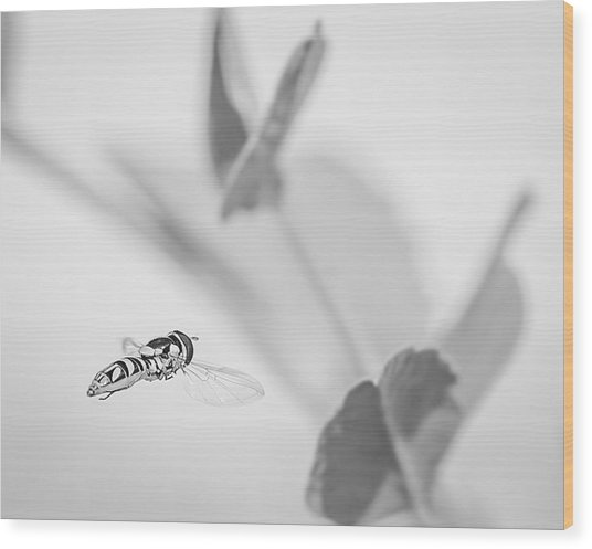 hoverfly in the pea patch B/W Wood Print