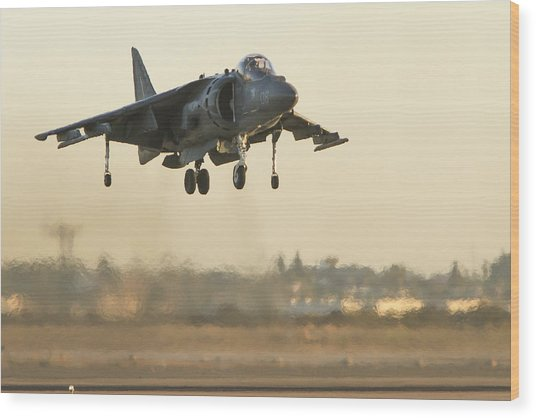 Hovering Harrier Wood Print