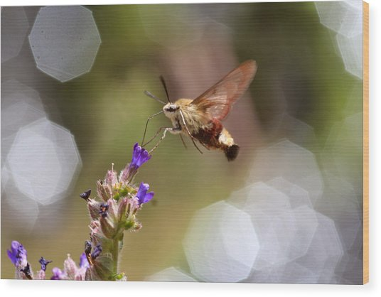 Hovering Pollination Wood Print