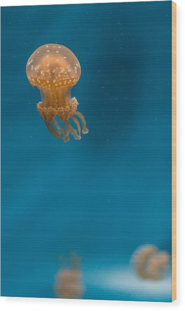 Hovering Spotted Jelly 2 Wood Print