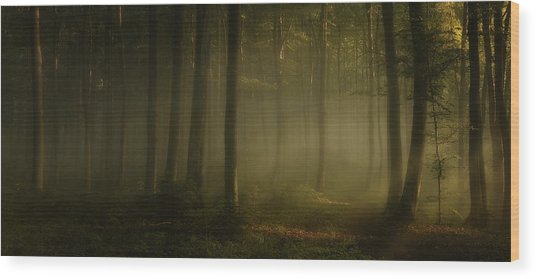 How Can Words Express The Feel Of Sunlight In The Morning Wood Print