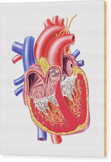 Human Heart, Artwork Wood Print by Leonello Calvetti