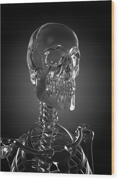 Human Skull Rendered In Glass Wood Print by Sebastian Kaulitzki/science Photo Library