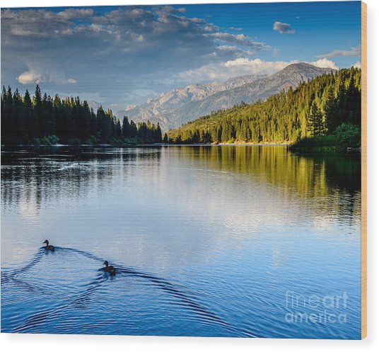 Hume Lake Evening Wood Print