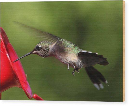 Look Hummingbird Eyelashes Wood Print