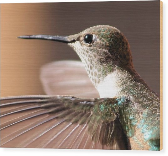 Hummer On The Wing Wood Print
