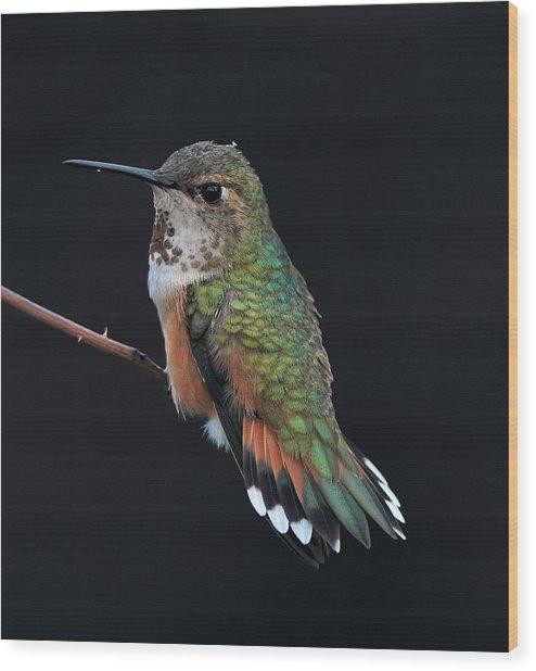 hUMMER Wood Print by Ray Morris