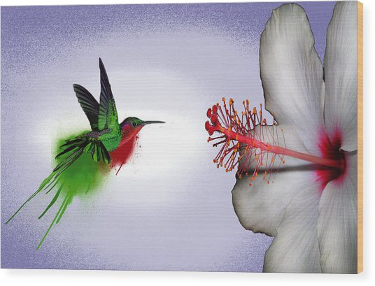 Hummer Splash In Flight Wood Print by Diana Shively