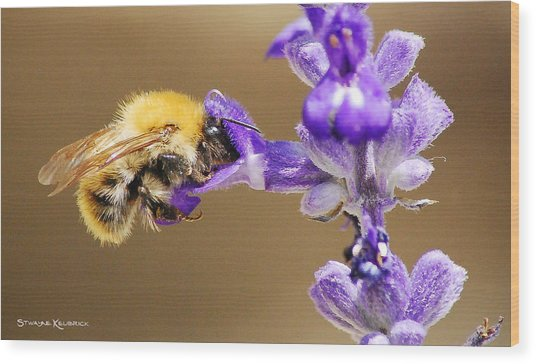 Wood Print featuring the photograph Humming Bee  by Stwayne Keubrick